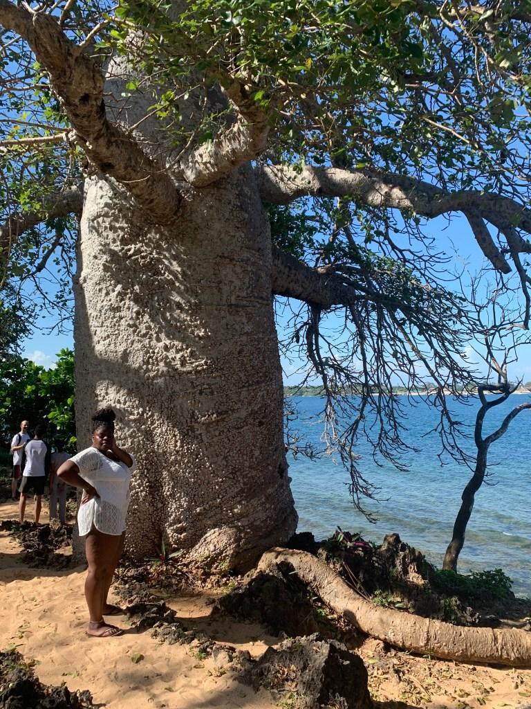 a Baobab tree on wasini island